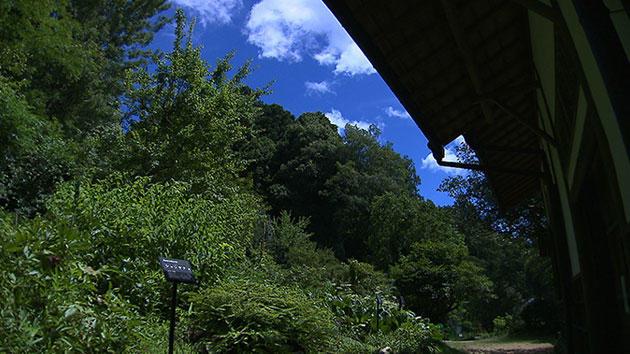 薬草のタイムカプセル ~奈良・森野旧薬園の四季~