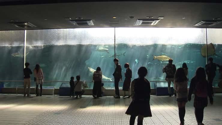 入場料 須磨海浜水族園